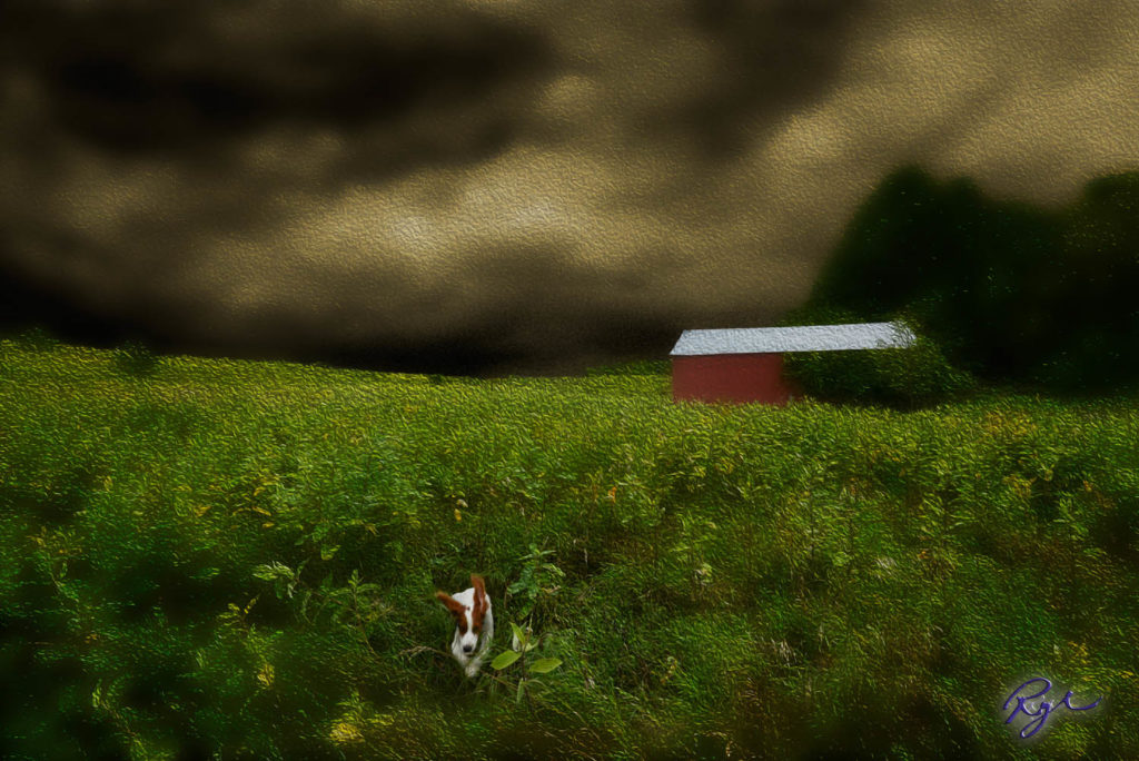 Puppy runs Home Before the Storm